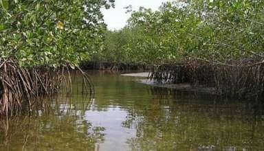 Mangroves du Sénégal - image iucn